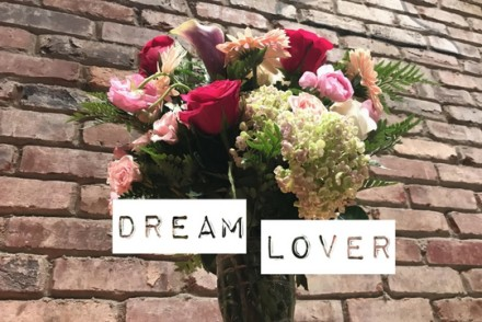 dream lover cover
